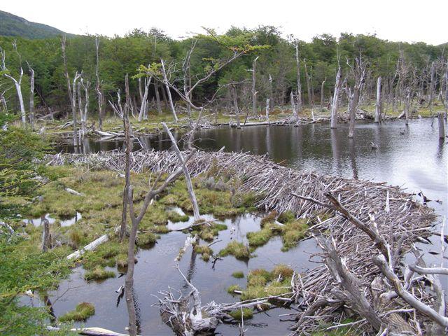 beverdam - Tierra del Fuego park