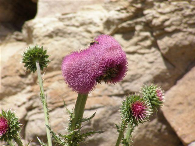 bloemen in Patagonie