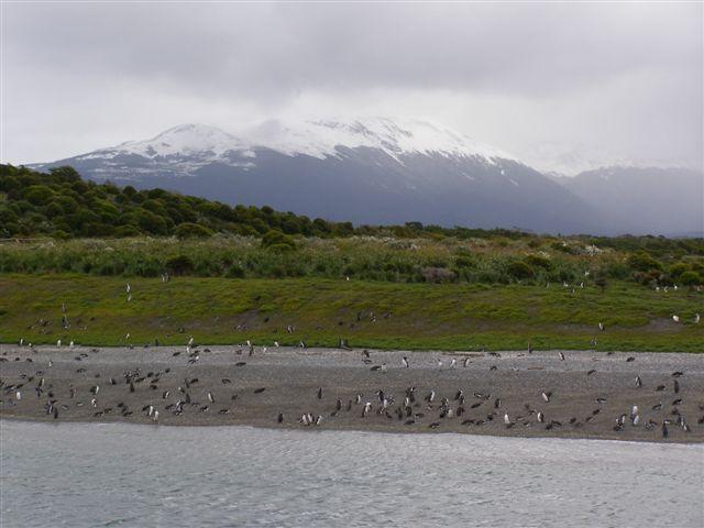 pinguins-eiland-Vuurland