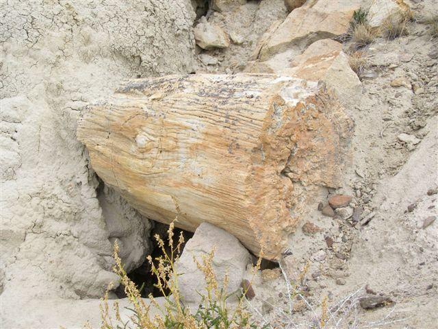 stenen boomstam - route 40