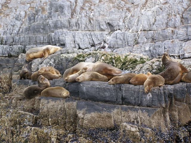Eiland zeeleeuwen - Vuurland
