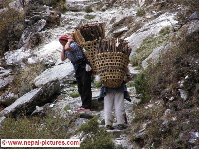 Sherpa vrouwen met hout