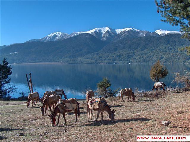 donkeys resting