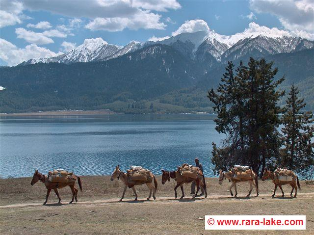 donkeys near Rara